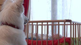 Kutya és kisbaba: Lépésről lépésre az álomcsapatig