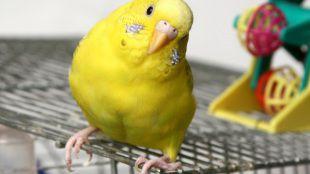 Fontos táplálék-kiegészítők madaraknak