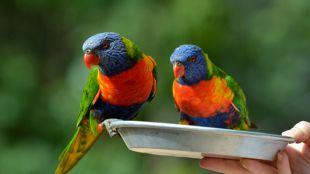 Elsősegély a madaraknak