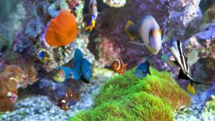 Lépésről-lépésre útmutató karibi-akvárium telepítéshez