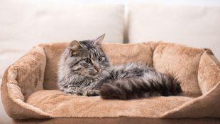 A hónap legjobb cicás kiegészítői