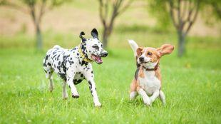 Mikor engedhetjük oda kedvencünket idegen kutyához?