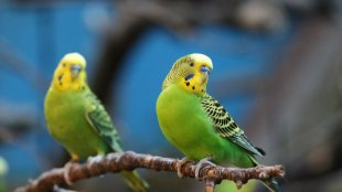 Megviseli-e papagájodat a tél?