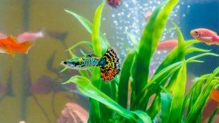 Tavaszi akváriumdekoráció