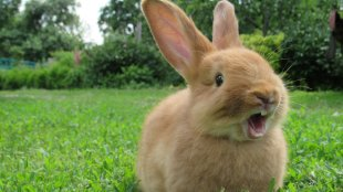 Kisemlősök, és amit a fogápolásukról tudni érdemes