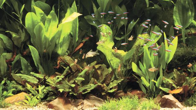 Különleges halfajta: a vitorláshalak