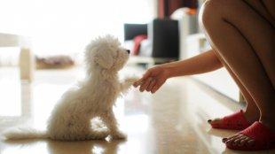 Mikor érdemes kutyakiképzőhöz fordulni?