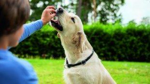 Hogyan motiváljunk egy olyan kutyát a tanításnál, akit semmi sem érdekel?