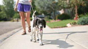 Mit tegyünk, hogy a kutyusunk ne reagáljon a kerítés mögött ugató társaikra?